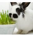 Tráva pro králíky - semena - 15 g