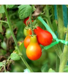Rajče Červená hruška - Lycopersicon esculentum - semena - 7 ks