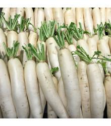 Ředkev Alabaster F1 - Raphanus sativus - semena - 100 ks