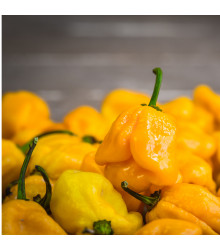 Chilli Trinidad scorpion butch žluté – Capsicum chinense – semena chilli – 5 ks