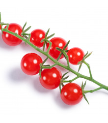 Divoké rajče Sweet Pea – Solanum pimpinellifolium – semena – 6 ks