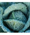 Kapusta hlávková Langedijské - Brassica oleracea L. - semena - 160 ks