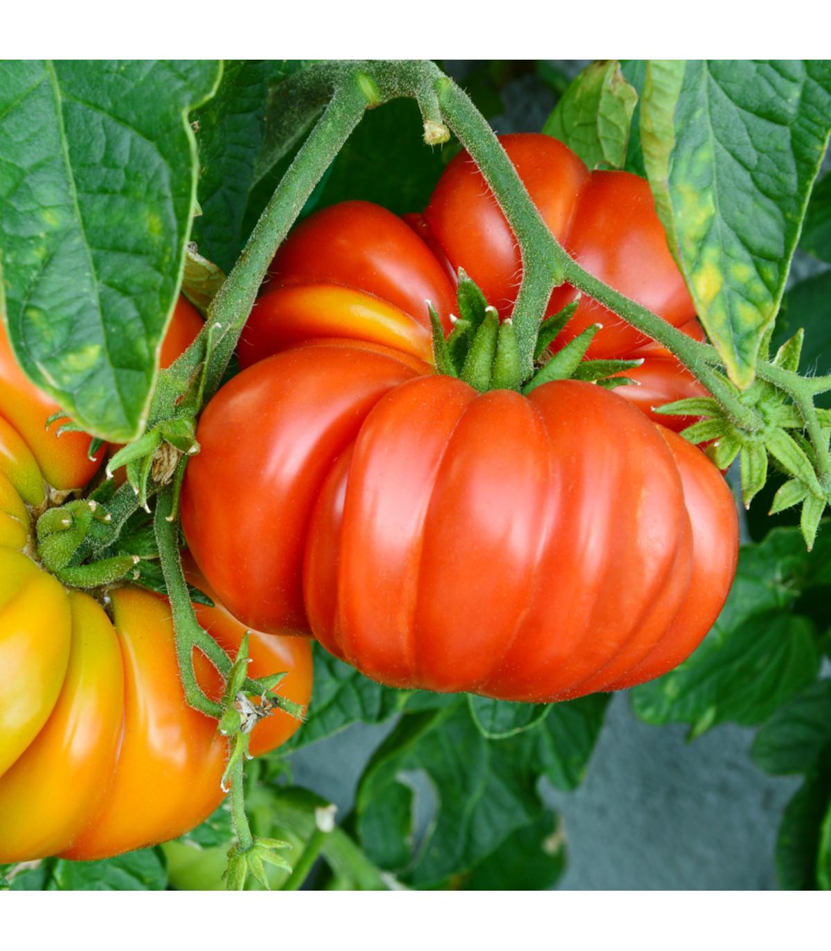 Rajče Brandywine červené - Solanum lycopersicum - semena - 7 ks