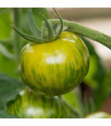 BIO rajče Zelená zebra - Lycopersicon esculentum - původní odrůdy rajčat - bio semena - 6 ks