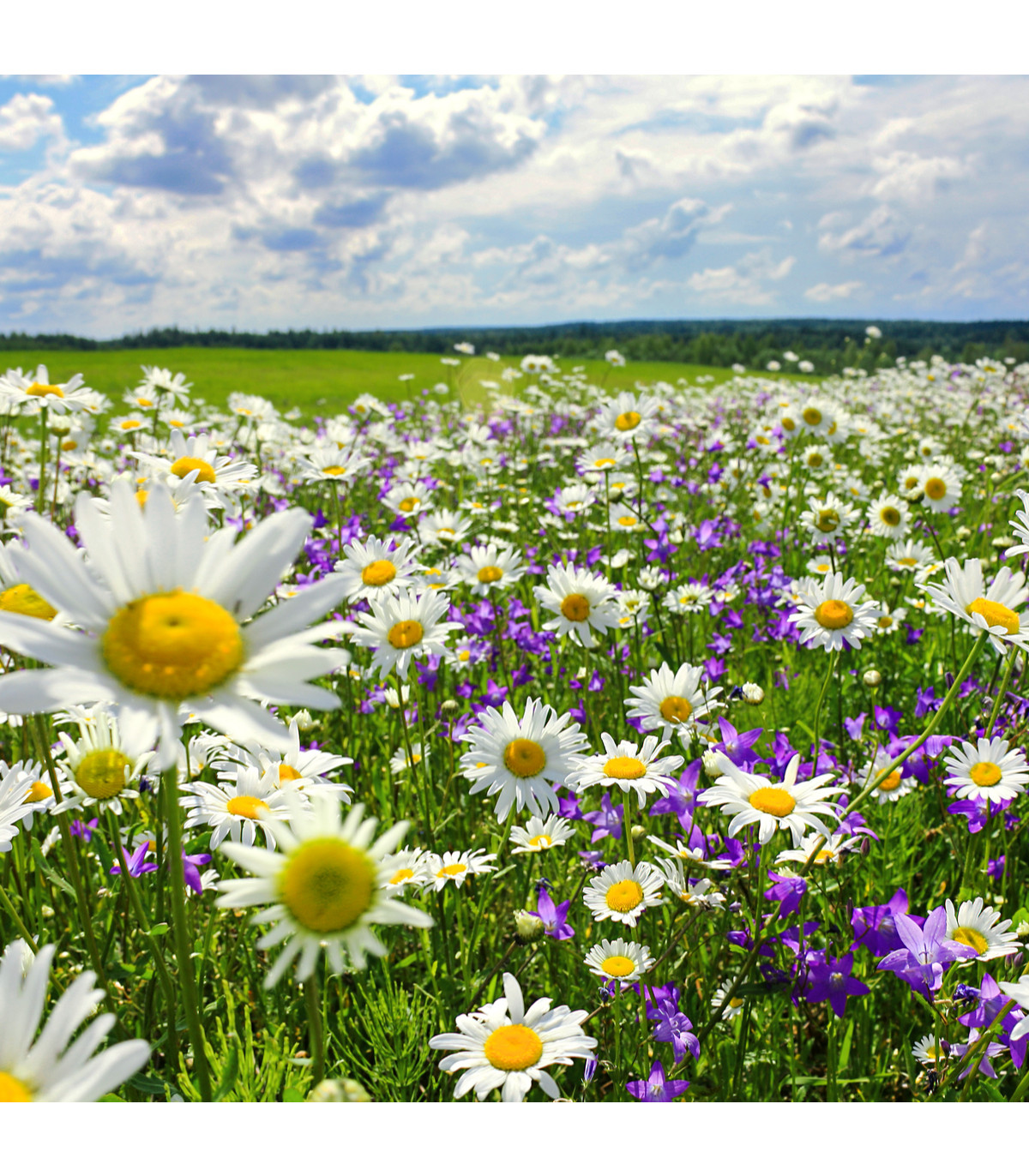 Slunná stráňka - pravé luční květiny - semena - 50 g