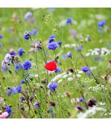 Česká květnice - semena - 50 g