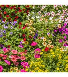 Letničky Visuté zahrady - směs letniček - semena - 0,9 g