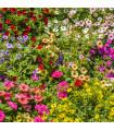 Letničky - Visuté zahrady směs - semena - 0,9 g