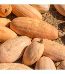 BIO Tykev Pink Jumbo Banana - Cucurbita maxima - bio semena tykve - 5 ks