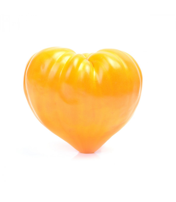 Rajče Oranžová jahoda - Lycopersicon lycopersicum - semena - 6 ks