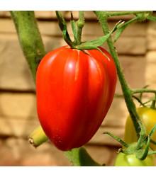 Rajče Big Mama F1 - Lycopersicon esculentum - semena - 7 ks