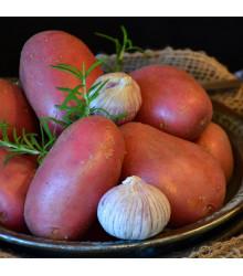 Sadbové brambory Rosara - Solanum tuberosum - červené velmi rané - 5 kg