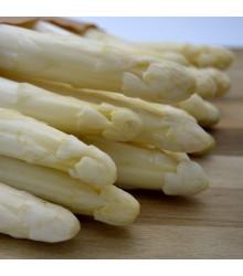 Chřest Thielim - Asparagus officinalis - sazenice - 1 ks