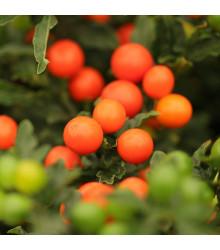 More about Lilek okrasný Jupiter - Solanum pseudocapsicum - semena okrasného lilku - 10 ks