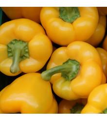 Paprika Gelber Block F1 - Capsicum annuum - semena papriky - 7 ks