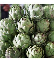 Artyčok Green Globe - Cynara scolymus - semena - 20 ks