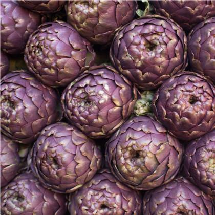 Artyčok fialový - Cynara scolymus - semena  - 1 gr