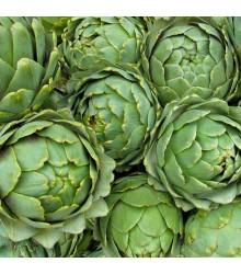 Artyčok zelený Grosse von Laon - Cynara scolymus - semena - 20 ks