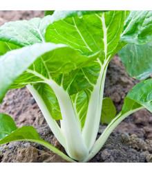 Pak Choi čínské zelí - Brassica chinensis - semena - 100 ks