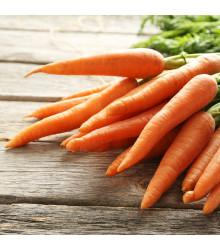 Mrkev letní Juwarot - Daucus carota - semena - 900  ks