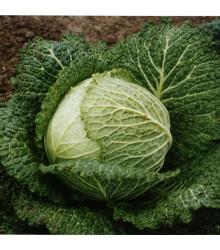 Kapusta hlávková Verita F1 - Brassica oleracea var. sabauda - osivo kapusty - 110 ks