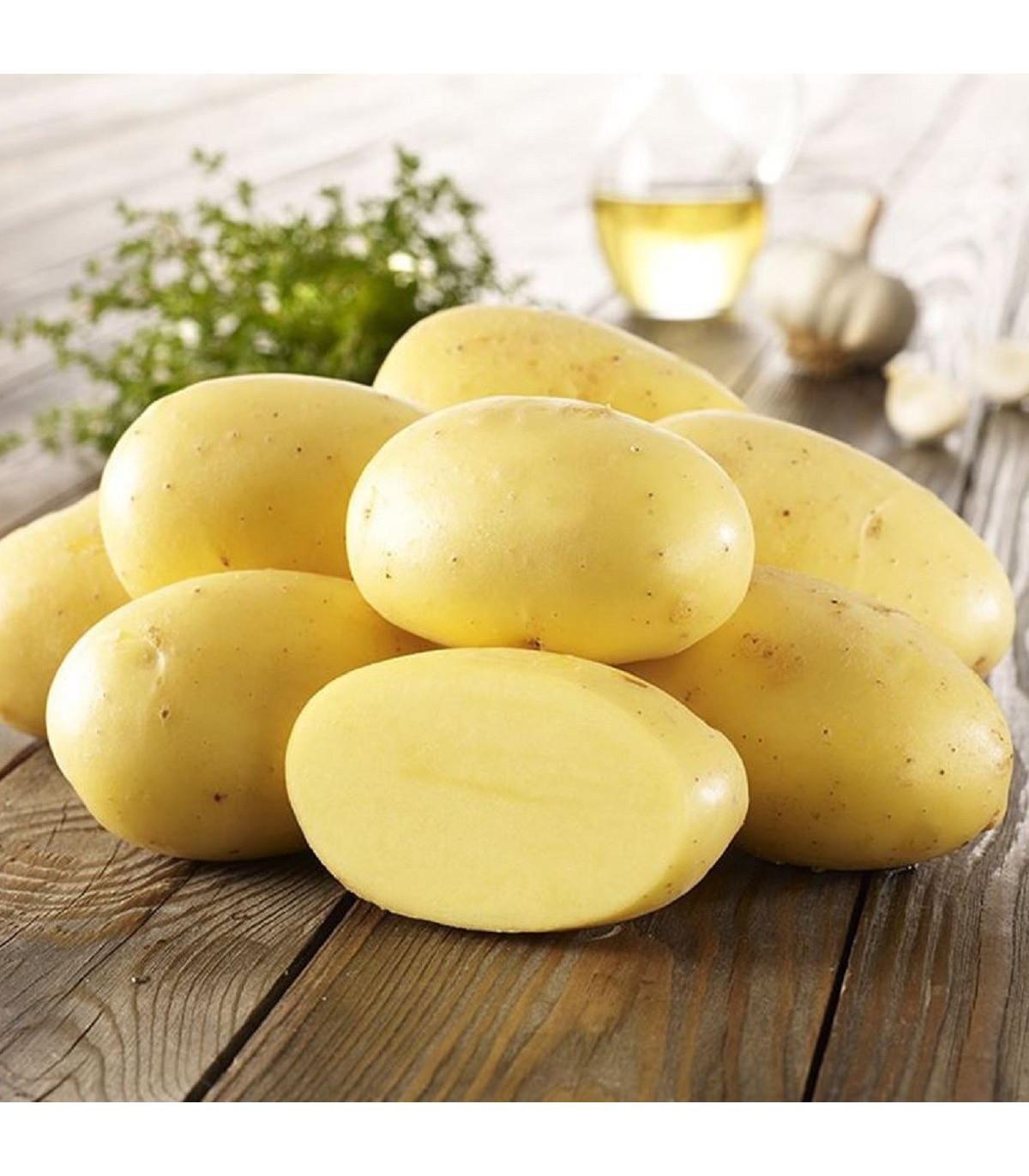 Sadbové brambory Agria - Solanum tuberosum - Kiepenkerl - 10 ks
