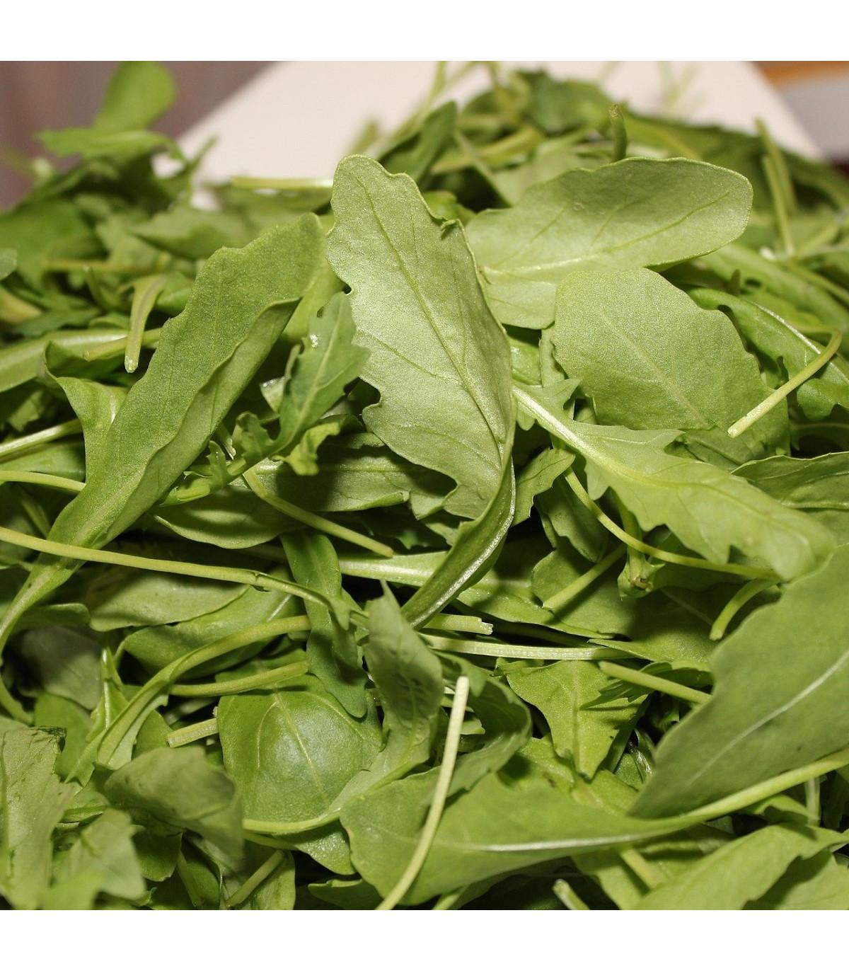 Roketa setá Viktoria - Eruca vesicaria - semena - 0,5 g