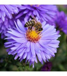 Medonosné květy pro včely - semena - 10 g
