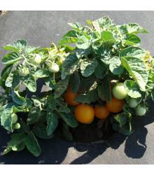 Rajče Venus - Lycopersicon esculentum – semena rajčat - 10 ks
