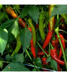 Paprika kozí roh Poseidon – Capsicum annuum – semena chilli – 15 ks