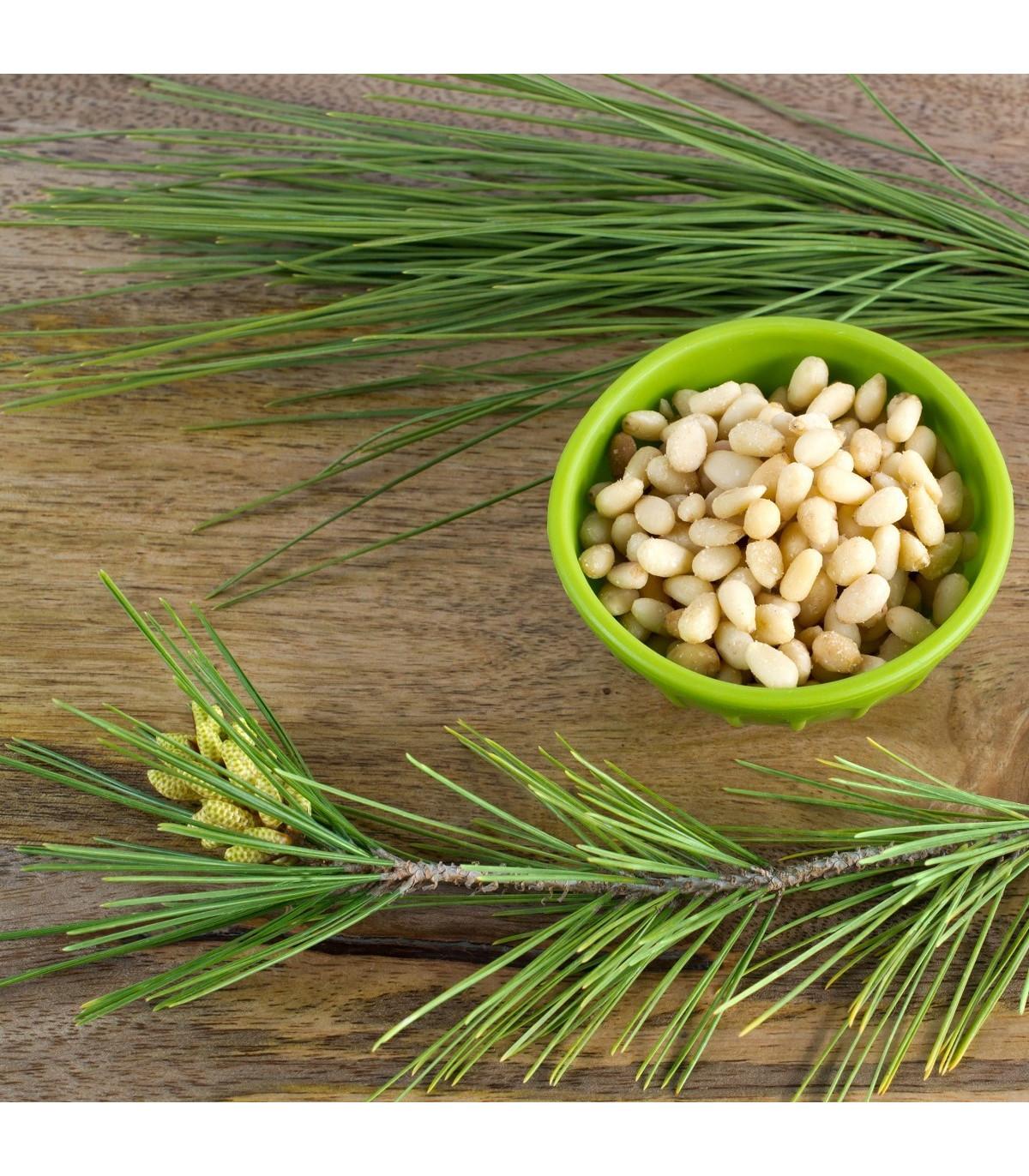 Borovice gerardiana - Pinus gerardiana - semena borovice - 5 ks