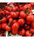 BIO Rajče polní zakrslé Saint Pierre – Lycopersicon esculentum – bio semena rajčete - 7 ks