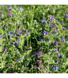 Hadinec jitrocelovitý - Echlum plantagineum - semena hadince - 0,5 g