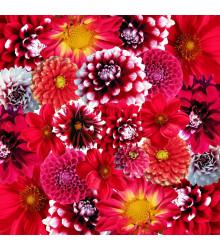 Zahradní sen v červeném - semena - směs letniček - 0,9 g