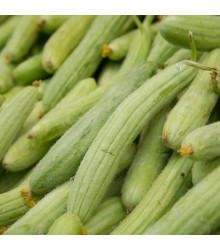 Okurka arménská - Cucumis melo - semena okurky - 6 ks