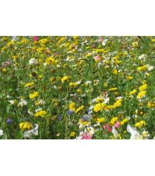 Letničky Kovbojská louka - směs letniček - semena - 0,9 g