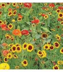 Letničky zahradní sen - směs letniček - semena - 0,9 g