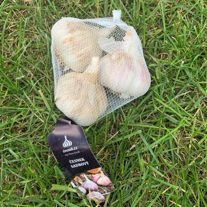 Sadbový česnek Havel - Allium sativum - paličák - cibule česneku - 3 ks