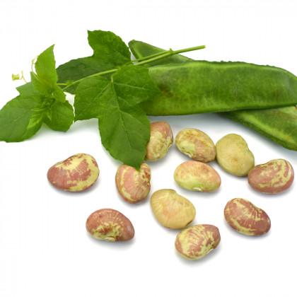 Keříčkové fazole