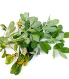 Ostatní exotické užitkové rostliny