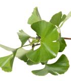 Ostatní exotické léčivé rostliny