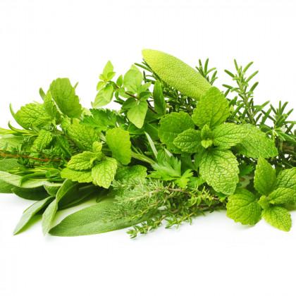 Ostatní léčivé rostliny
