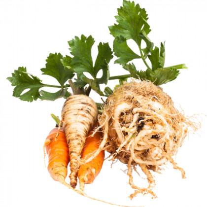 Kořenové zeleniny