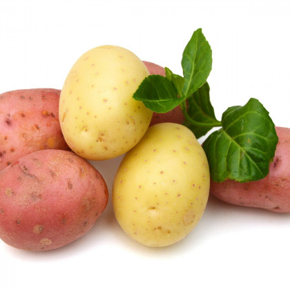 Sadbové brambory