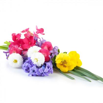 Venkovní okrasné květiny